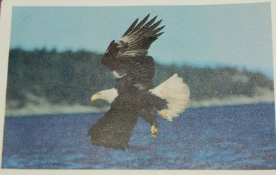 Postcard #55 - NewYork