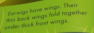 Earwigs have wings