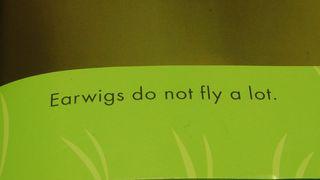 Earwigs do not fly
