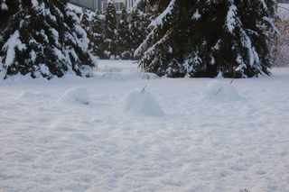 Snowforts today