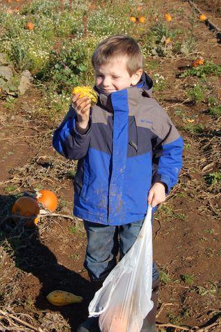 Finding a gourd