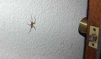 Big_spider