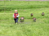 Feeding_the_geese7